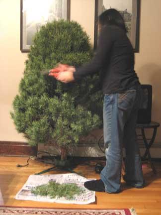The Mrs. trims our misshapen tree.